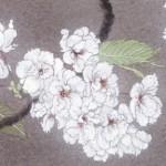 春風(さくら)