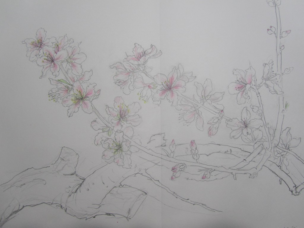 桃の花 さくら 桜 サクラ 日本画 横尾英子 Japanese painting of cherry blossoms