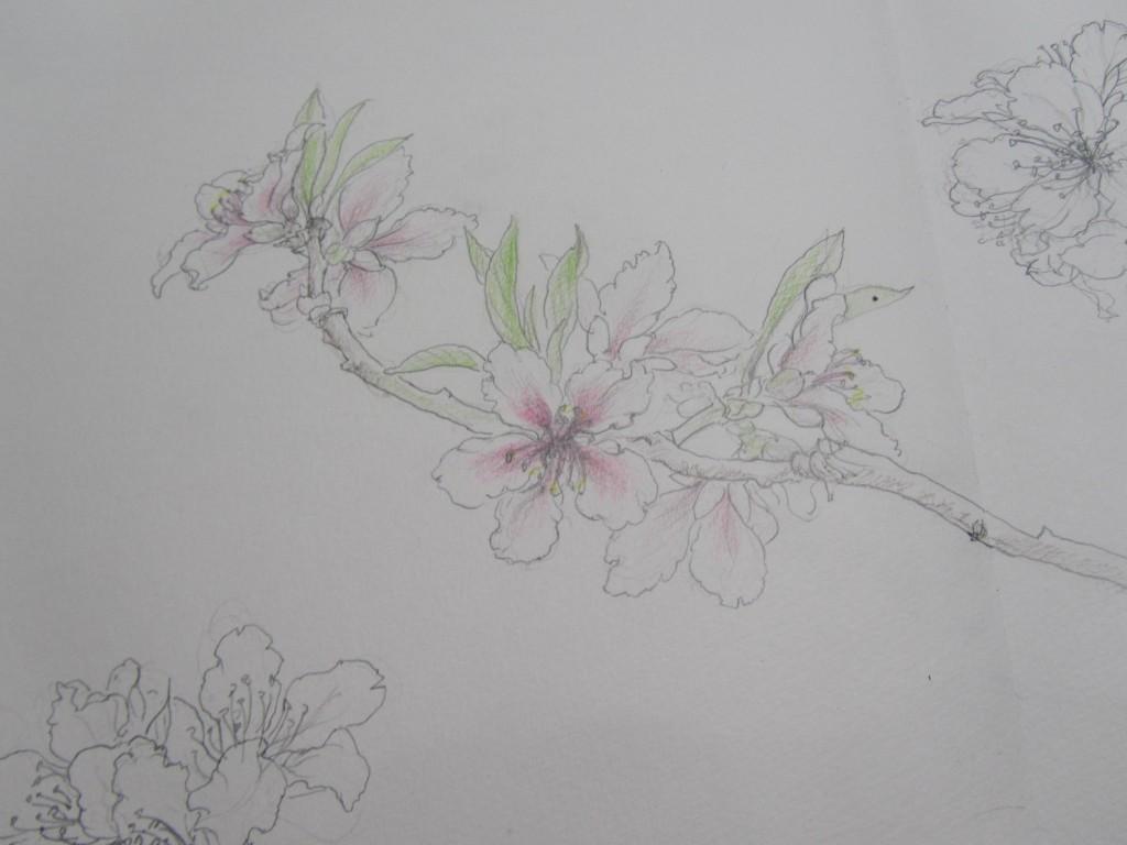 桃の花 2015年 2月18日