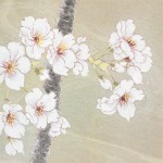 さくら 日本画 Japanese painting of cherry blossoms  13×13