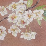 桜(ウコンざくら)日本画 Cherry blossoms-Japanese painting