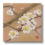 白梅 日本画 Ume blossoms