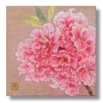 関山(八重桜)Cherry blossoms
