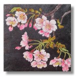 寒桜(かんざくら)日本画5 Cherry blossoms Cherry blossoms-Japanese painting