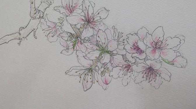 桃の花・スケッチ