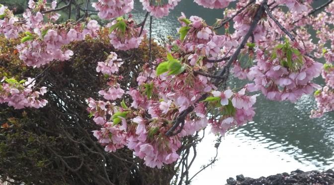 3月の新宿御苑