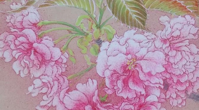 関山(さくら)・日本画