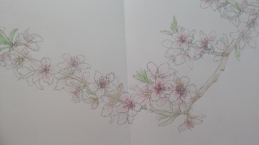 2017桃の花スケッチピクセル変更