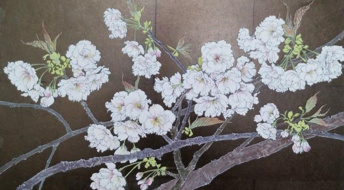 白妙(桜)
