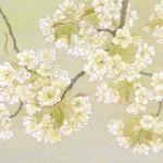 ウコン桜(8号変形)